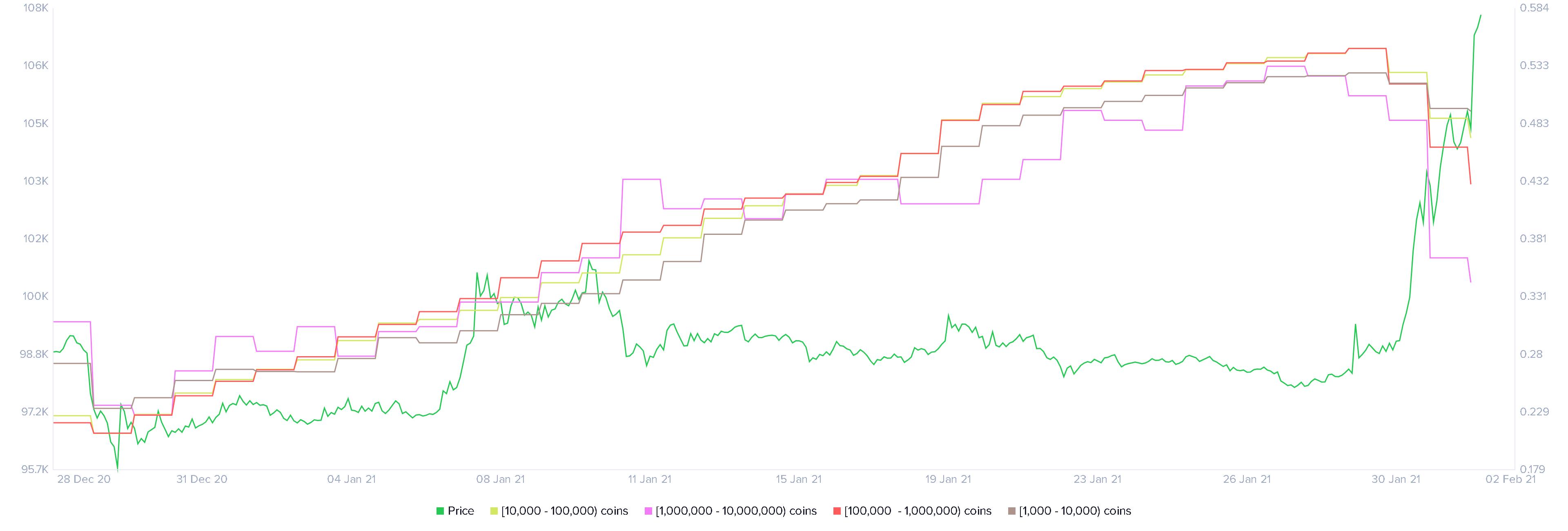 Tableau de distribution des détenteurs de baleines XRP