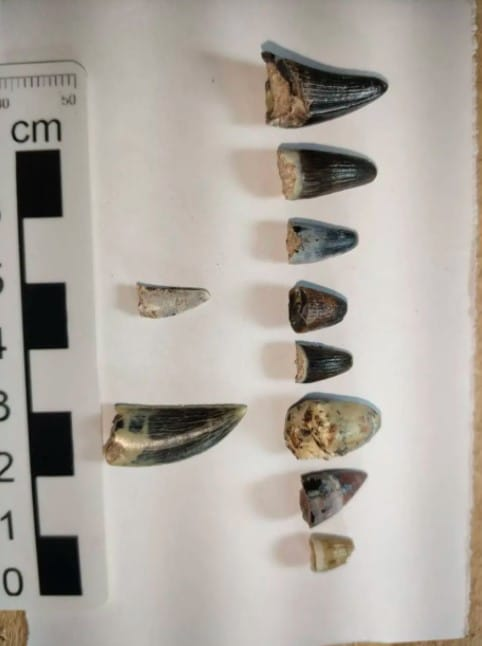 Des fossiles de dinosaures sont decouverts sur un projet dautoroute