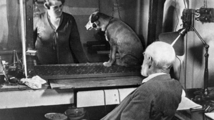 Image du test avec le chien d'Ivan Pavlov