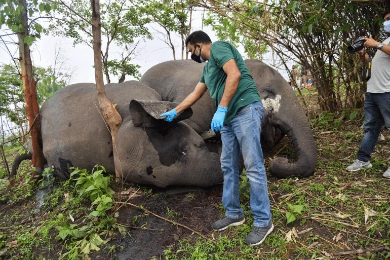 L'image montre un vétérinaire examinant le corps de l'un des éléphants qui auraient été tués par la foudre en Inde