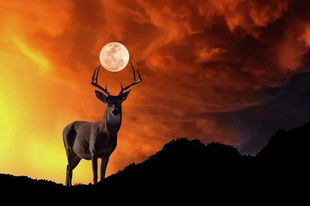 Juillet Est Le Mois De La Pleine Lune Du Cerf