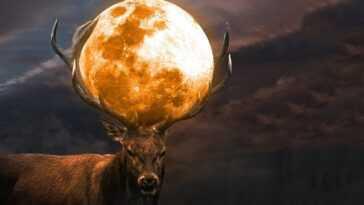 Pleine Lune Du Cerf Ce Soir 24 Juillet 2021 :