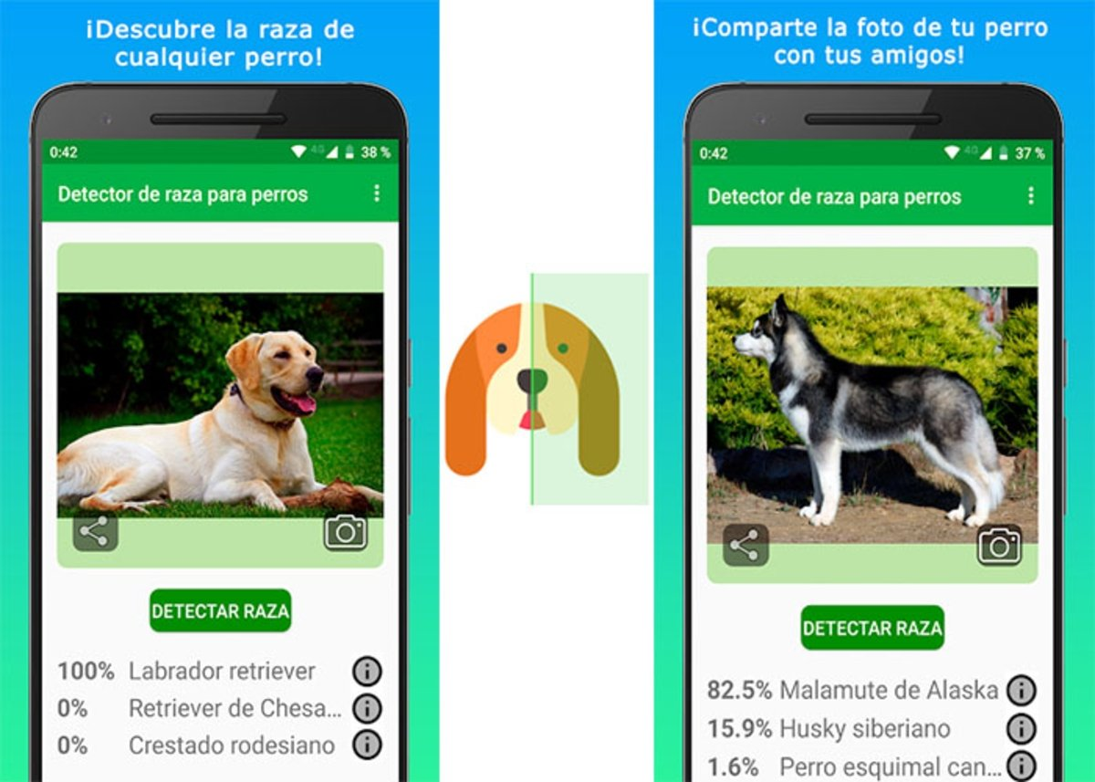 Identifiez la race de votre chien - Scanner de chien