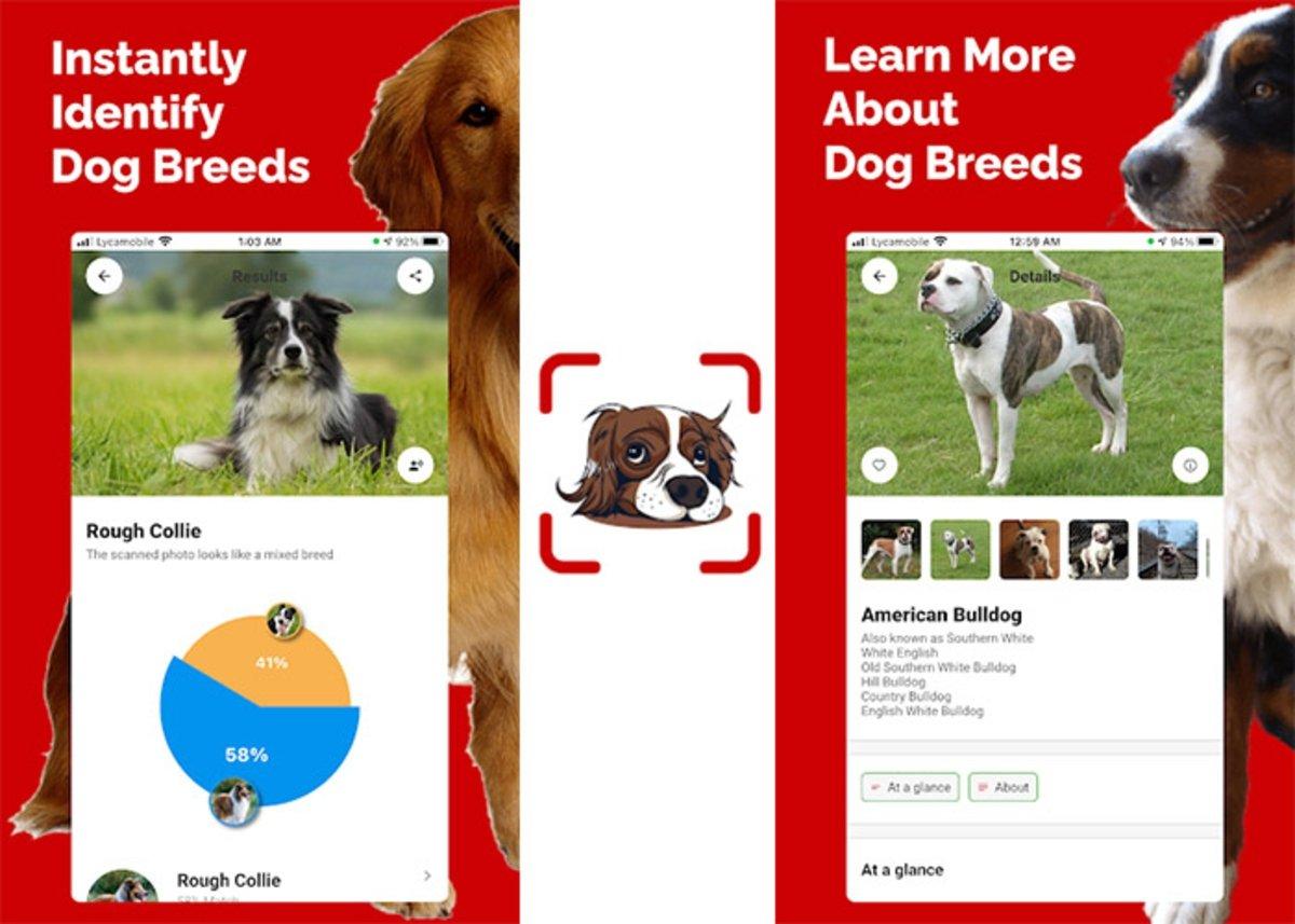 Identifiant de race de chien