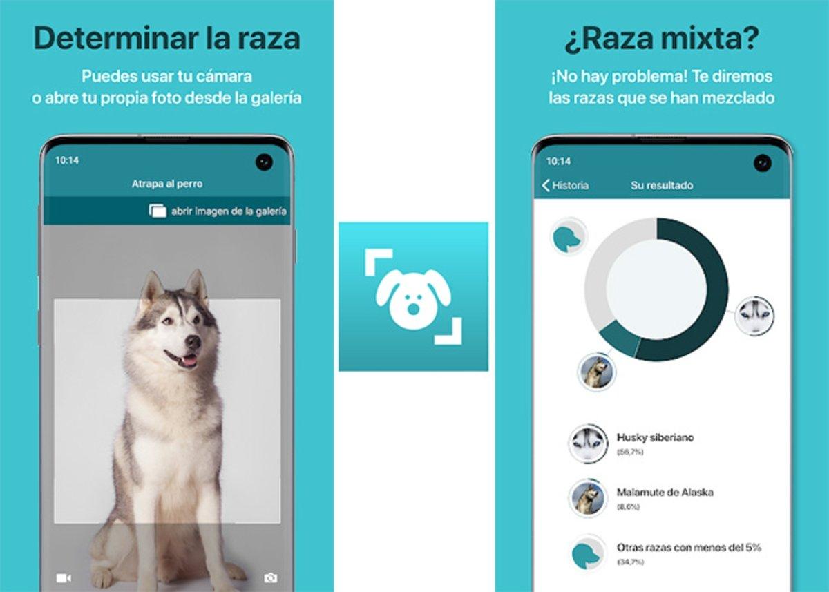 Dog Scanner - Identifiez la race du chien