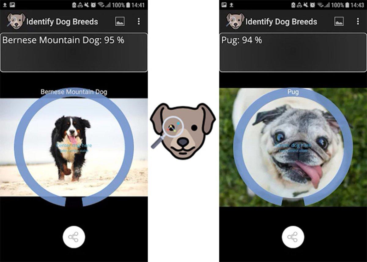 Identifier les races de chiens