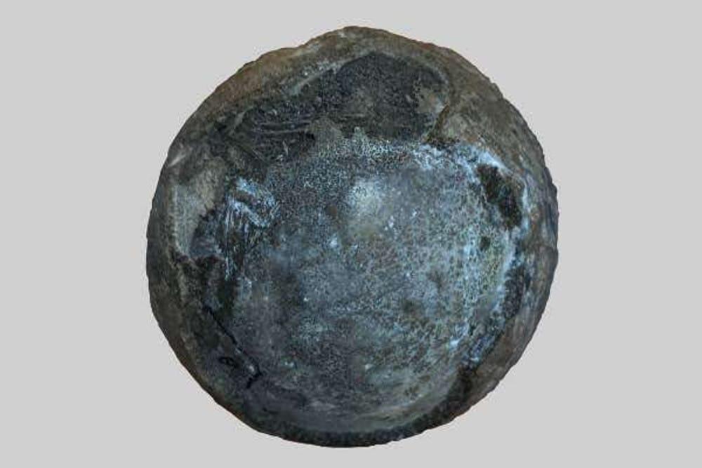 La photo montre un œuf de tortue préhistorique, trouvé en Chine et analysé par des experts en paléontologie