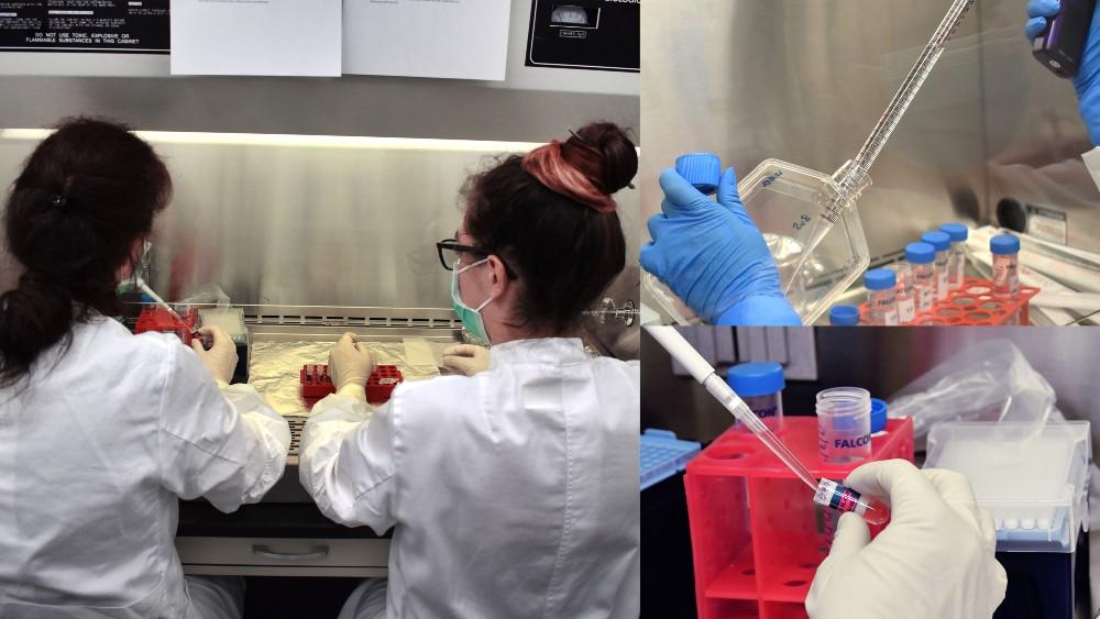 Les scientifiques extraient des organoïdes qui devraient développer des tissus humains dans une expérience à bord de l'Iss
