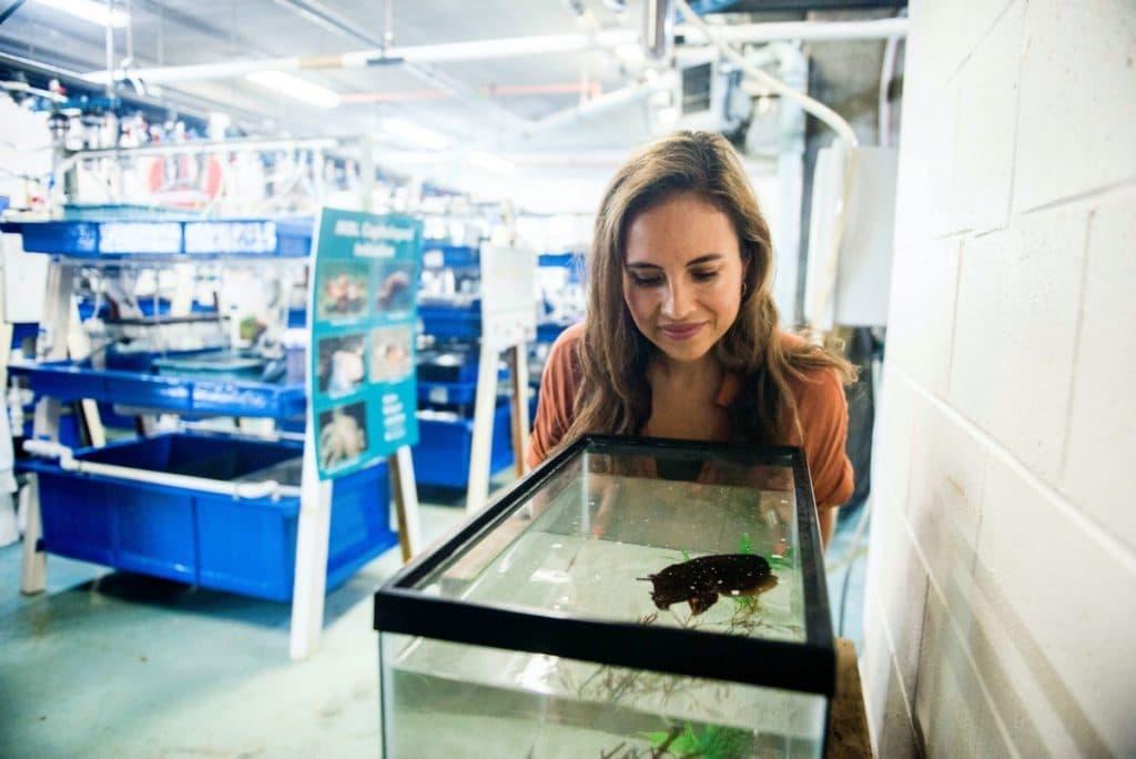 La scientifique Alexandra Schnell, regardant un aquarium contenant de la seiche, un type de mollusque apparenté au poulpe et au calmar