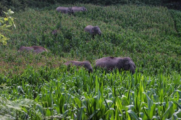 Les elephants qui ont enchante le monde avec un voyage