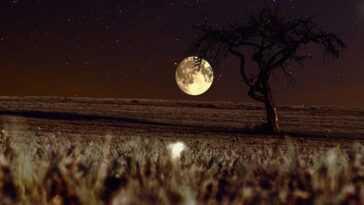 En Septembre, Il Y A La Pleine Lune Des Vendanges