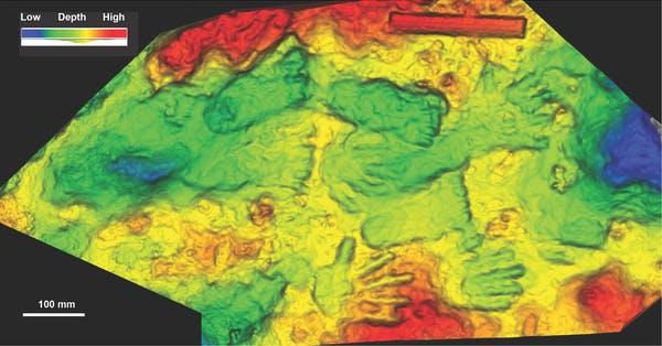 Fossiles de mains et de pieds denfants trouves dans le
