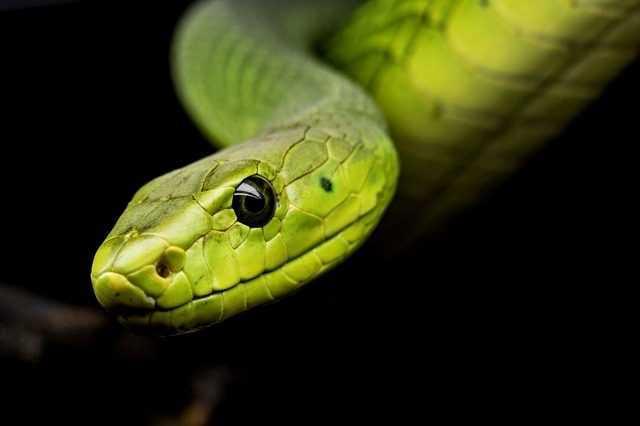 Tous Les Serpents Modernes Sont Dérivés Des Quelques Survivants De