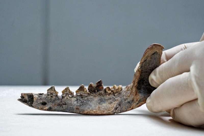 Animaux prehistoriques lAmerique centrale avait des chiens domestiques il